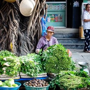 Việt-Nam_Hội-An_Mỹ-Sơn21