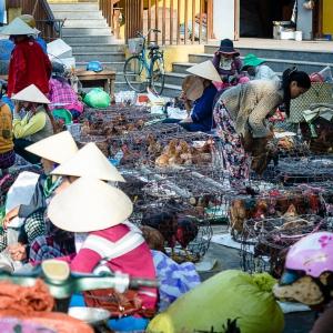 Việt-Nam_Hội-An_Mỹ-Sơn23